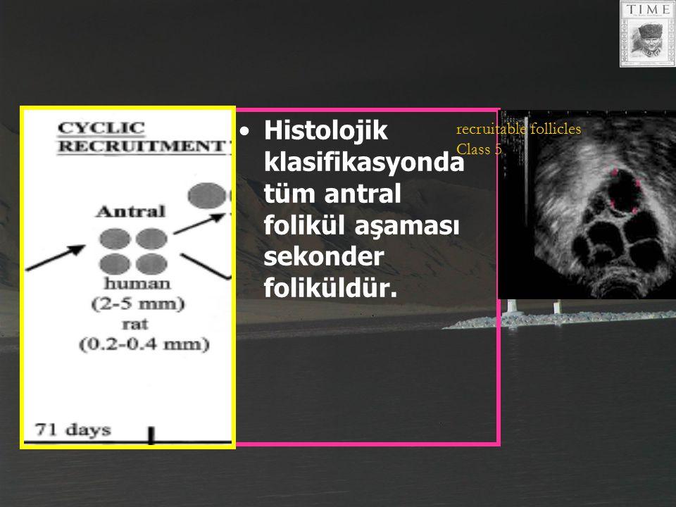 Histolojik klasifikasyonda tüm antral folikül aşaması sekonder foliküldür.