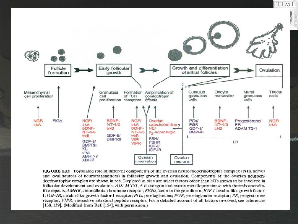 17 Folikül gelişimi ve ovulasyon üzerinde over nöroendokrinotropik kompleks (NT, sinirler vr lokal NT) farklı komponentlerinin ileri sürülen rolü.