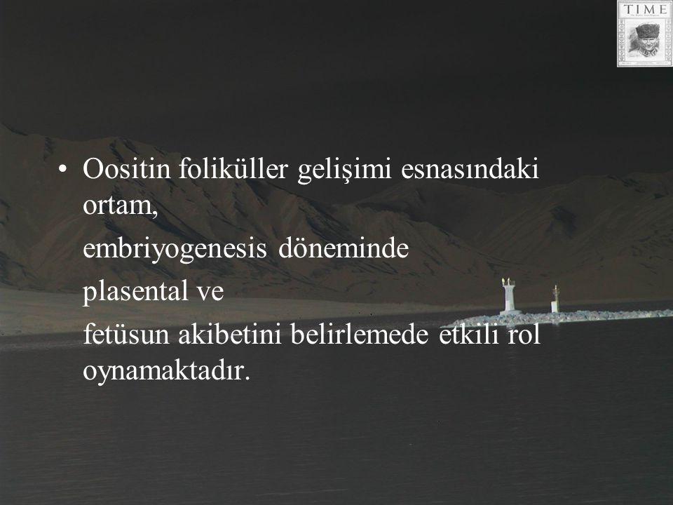 Oositin foliküller gelişimi esnasındaki ortam,