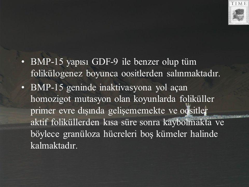 BMP-15 yapısı GDF-9 ile benzer olup tüm folikülogenez boyunca oositlerden salınmaktadır.