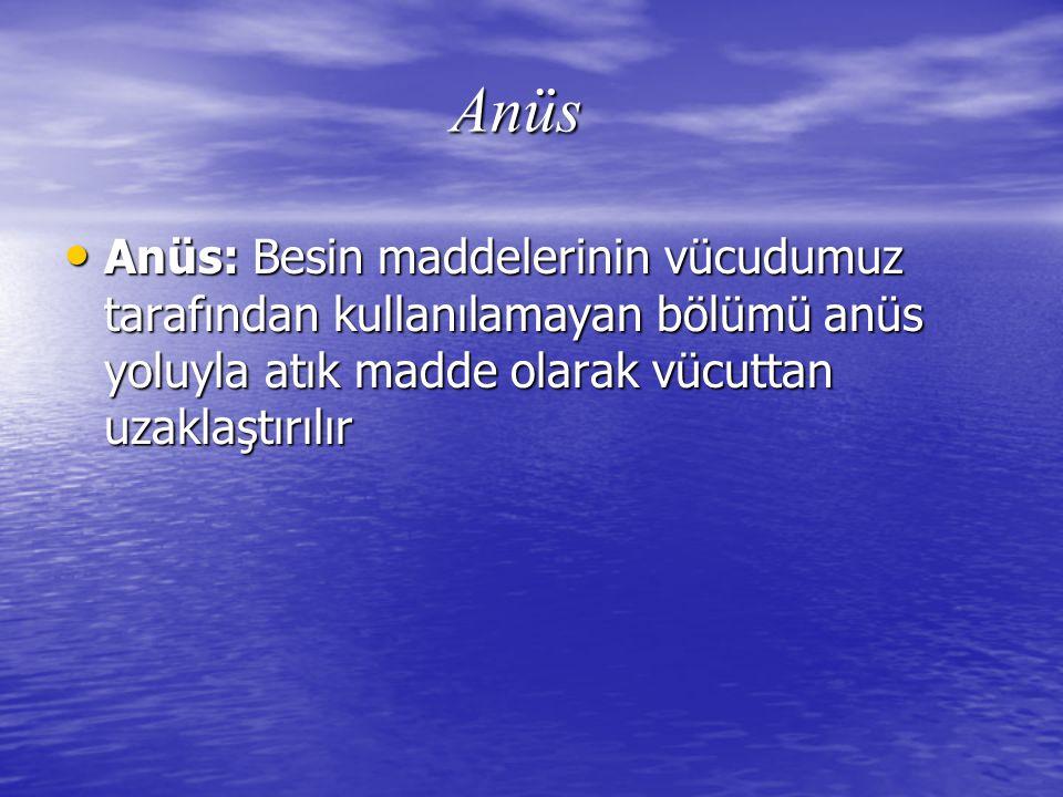Anüs Anüs: Besin maddelerinin vücudumuz tarafından kullanılamayan bölümü anüs yoluyla atık madde olarak vücuttan uzaklaştırılır.