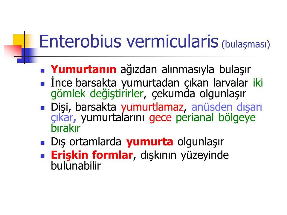 Enterobius vermicularis (bulaşması)
