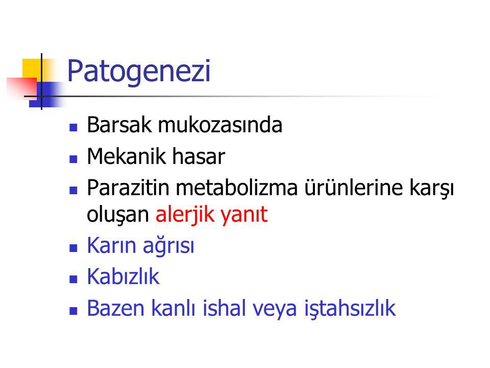 Patogenezi Barsak mukozasında Mekanik hasar