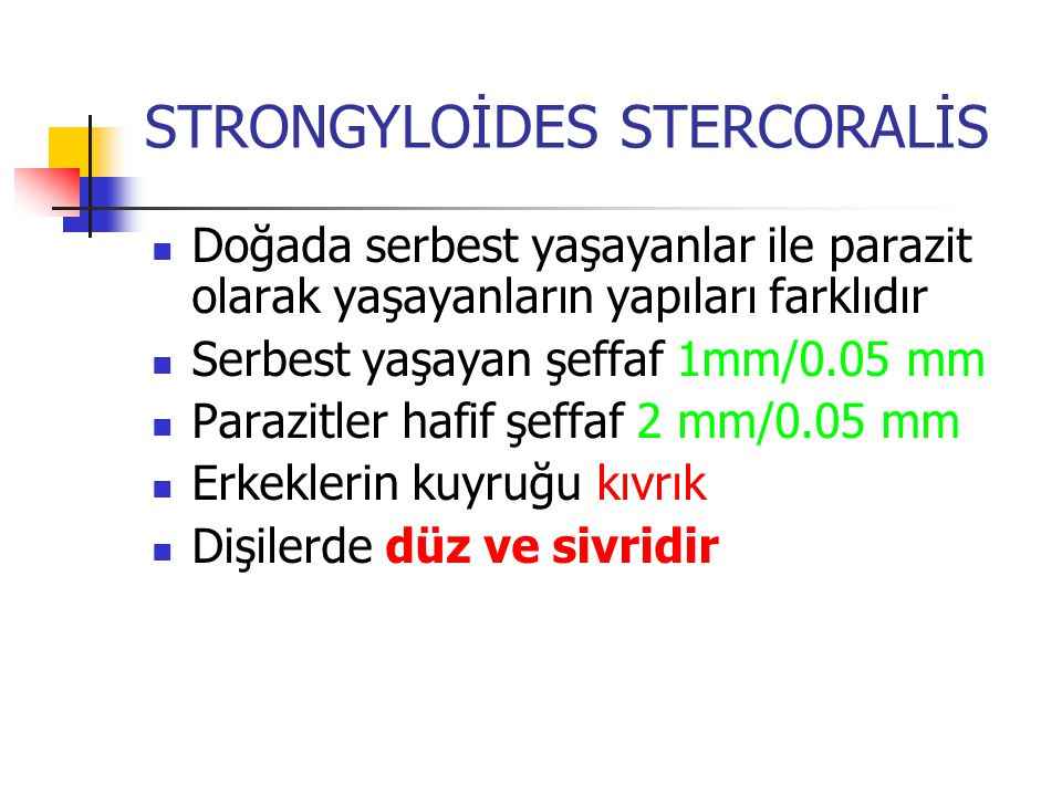 STRONGYLOİDES STERCORALİS