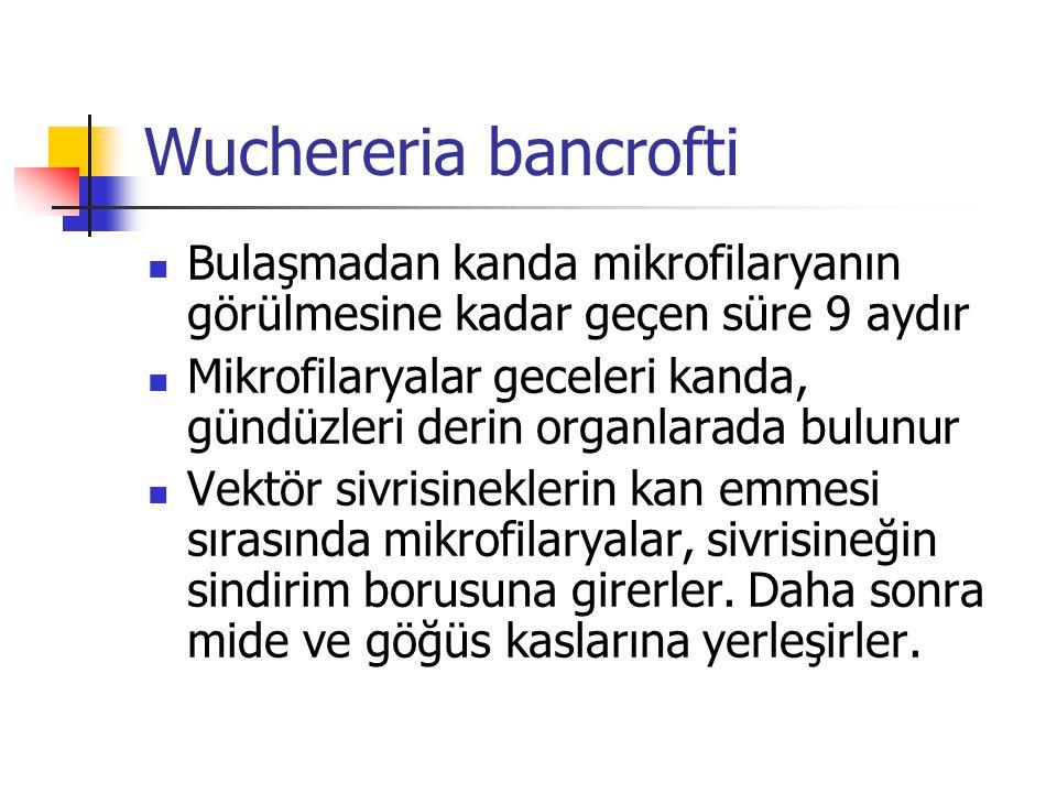 Wuchereria bancrofti Bulaşmadan kanda mikrofilaryanın görülmesine kadar geçen süre 9 aydır.