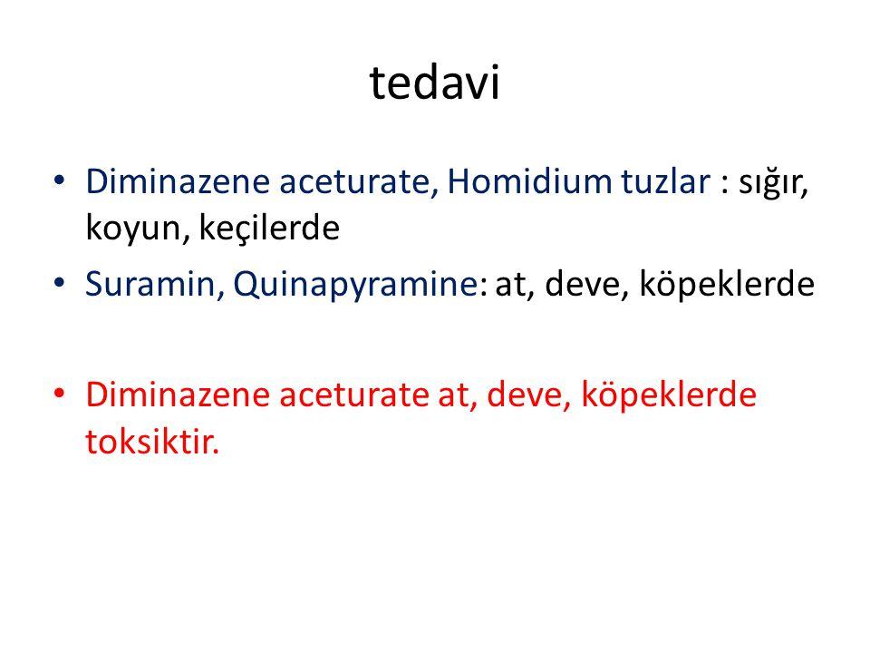tedavi Diminazene aceturate, Homidium tuzlar : sığır, koyun, keçilerde
