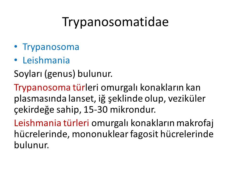 Trypanosomatidae Trypanosoma Leishmania Soyları (genus) bulunur.