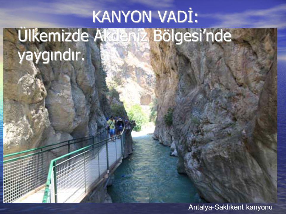 KANYON VADİ: Ülkemizde Akdeniz Bölgesi'nde yaygındır.