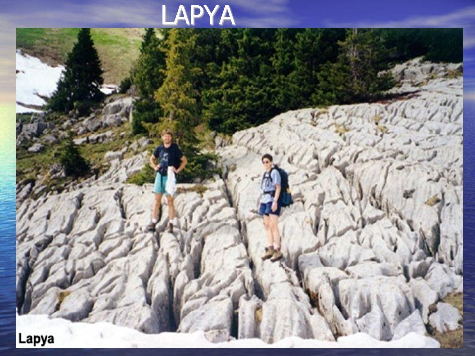LAPYA