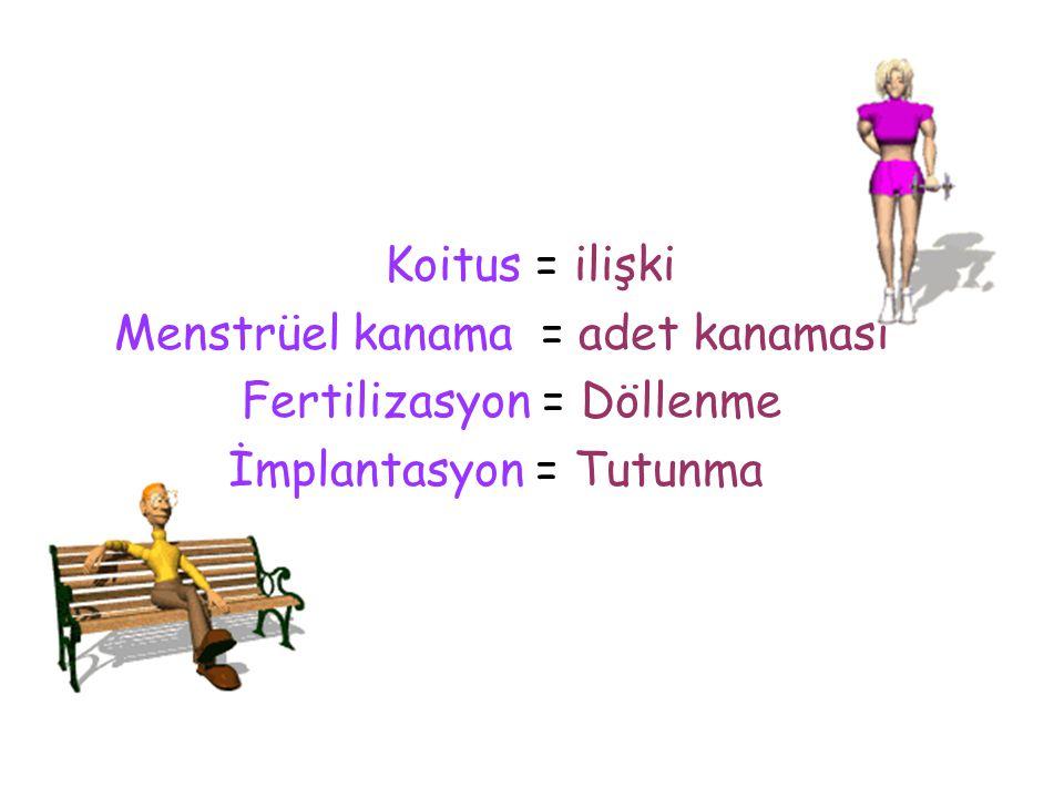 Koitus = ilişki Menstrüel kanama = adet kanaması Fertilizasyon = Döllenme İmplantasyon = Tutunma