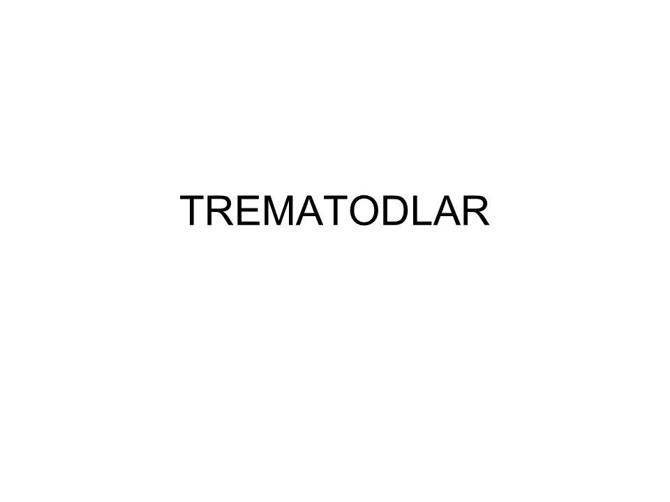 TREMATODLAR