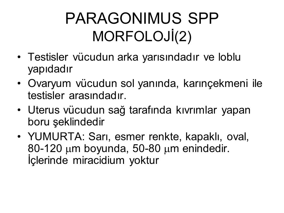 PARAGONIMUS SPP MORFOLOJİ(2)