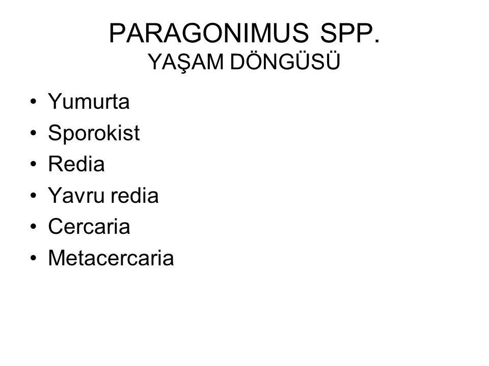 PARAGONIMUS SPP. YAŞAM DÖNGÜSÜ