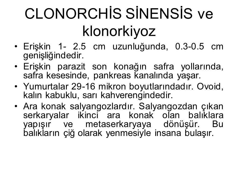 CLONORCHİS SİNENSİS ve klonorkiyoz
