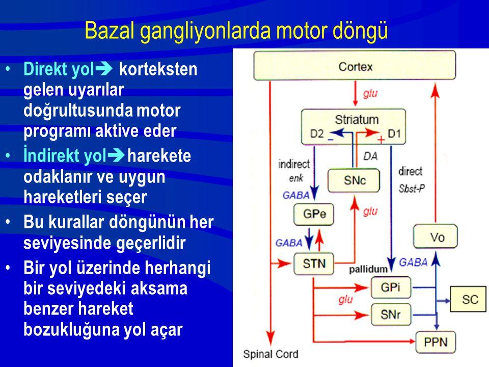 Bazal gangliyonlarda motor döngü