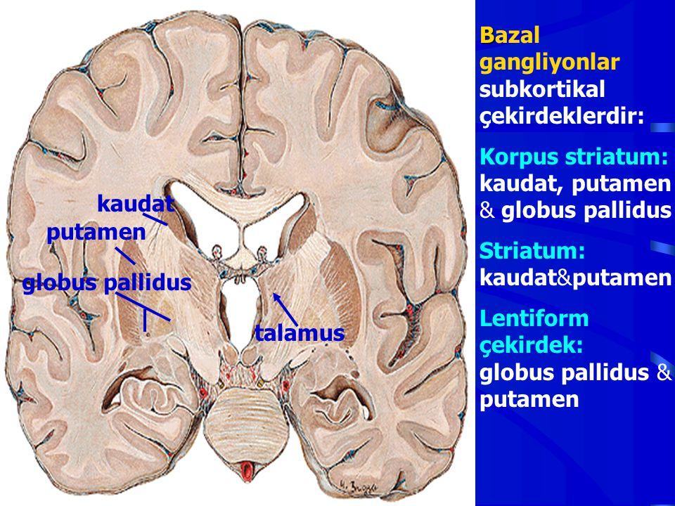 Bazal gangliyonlar subkortikal çekirdeklerdir: