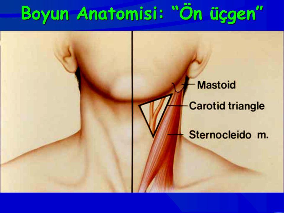 Boyun Anatomisi: Ön üçgen