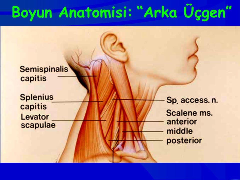 Boyun Anatomisi: Arka Üçgen