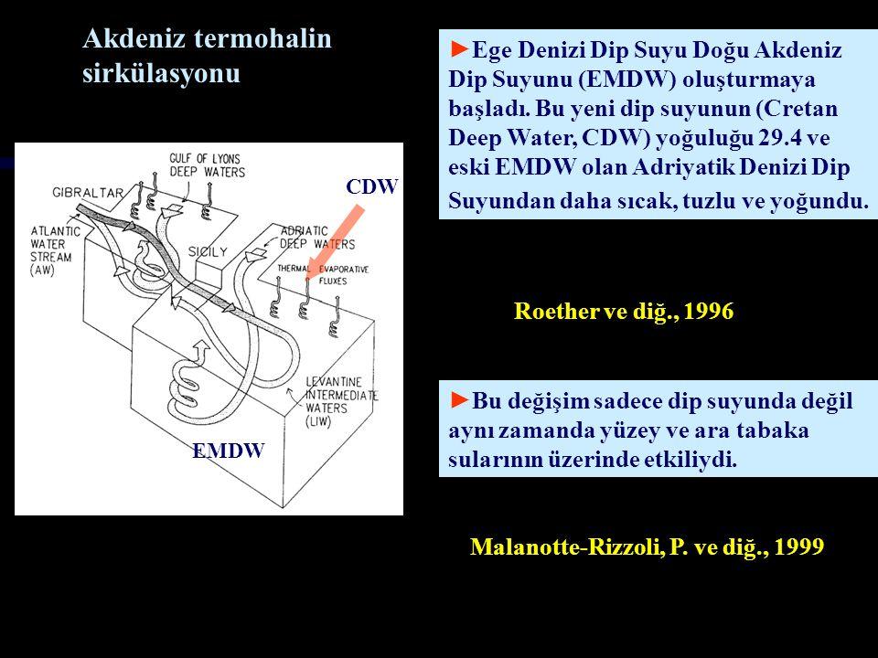 Akdeniz termohalin sirkülasyonu