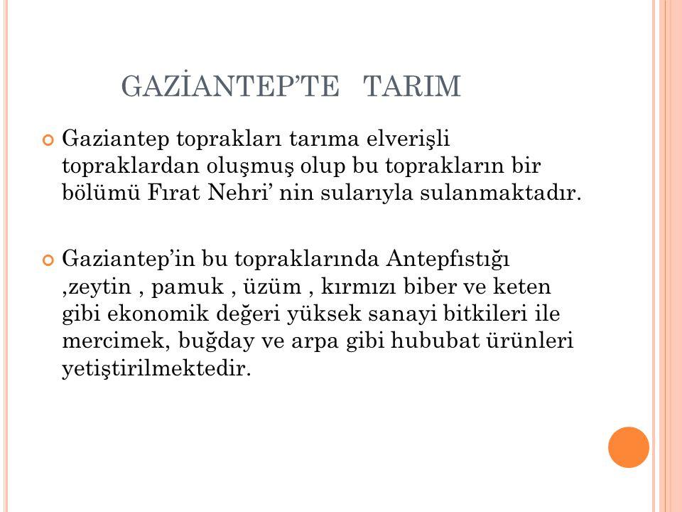 GAZİANTEP'TE TARIM