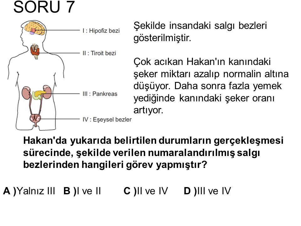 SORU 7 Şekilde insandaki salgı bezleri gösterilmiştir.