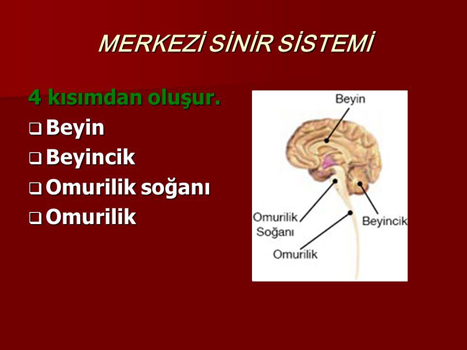 MERKEZİ SİNİR SİSTEMİ 4 kısımdan oluşur. Beyin Beyincik
