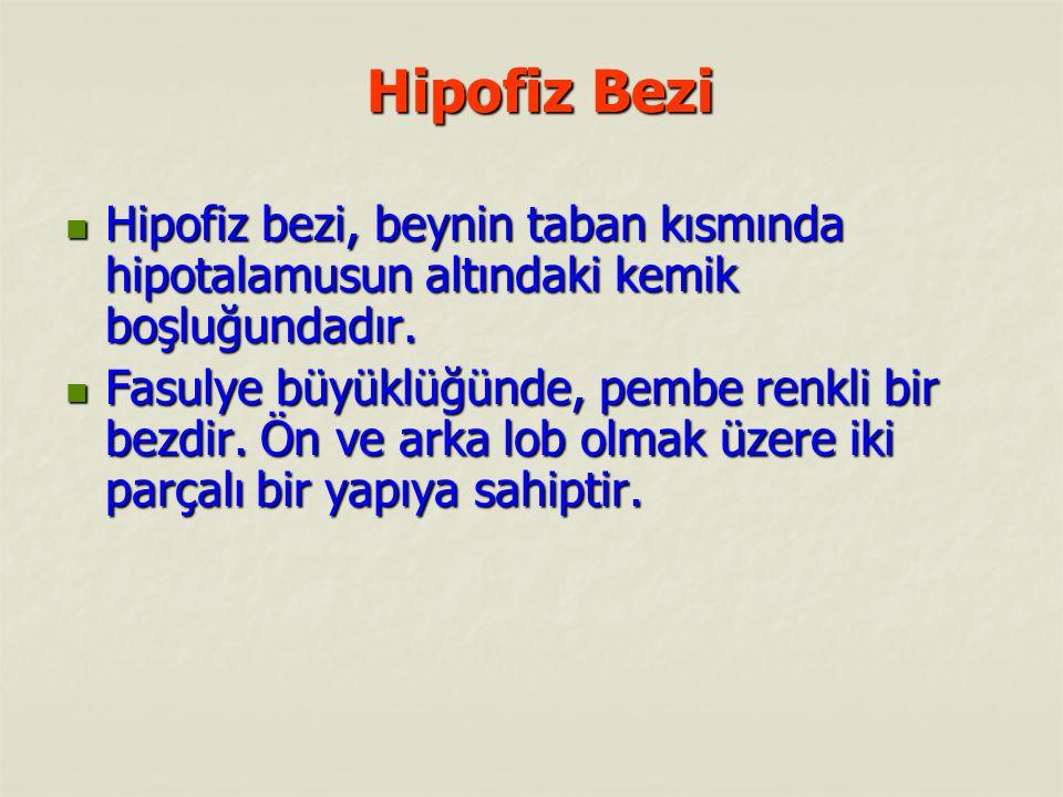 Hipofiz Bezi Hipofiz bezi, beynin taban kısmında hipotalamusun altındaki kemik boşluğundadır.