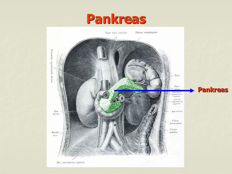 Pankreas Pankreas