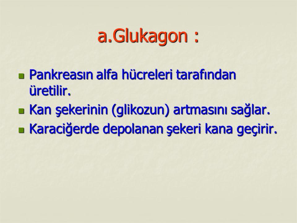 a.Glukagon : Pankreasın alfa hücreleri tarafından üretilir.