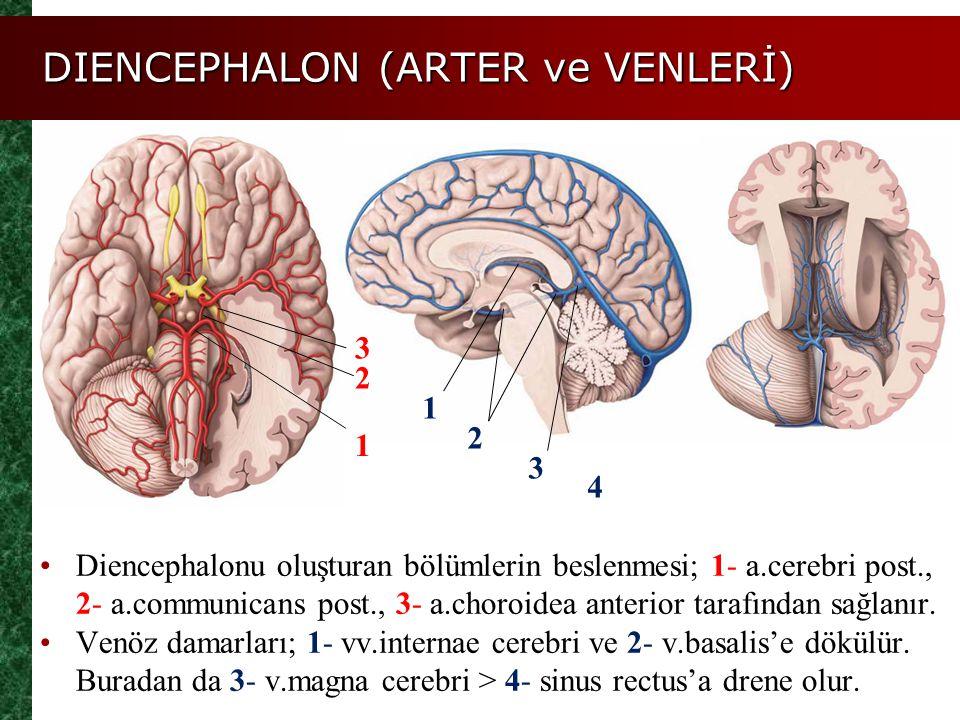 DIENCEPHALON (ARTER ve VENLERİ)