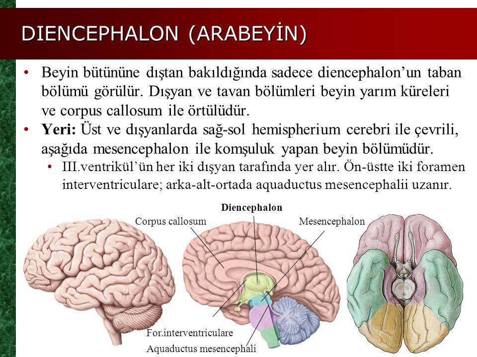DIENCEPHALON (ARABEYİN)