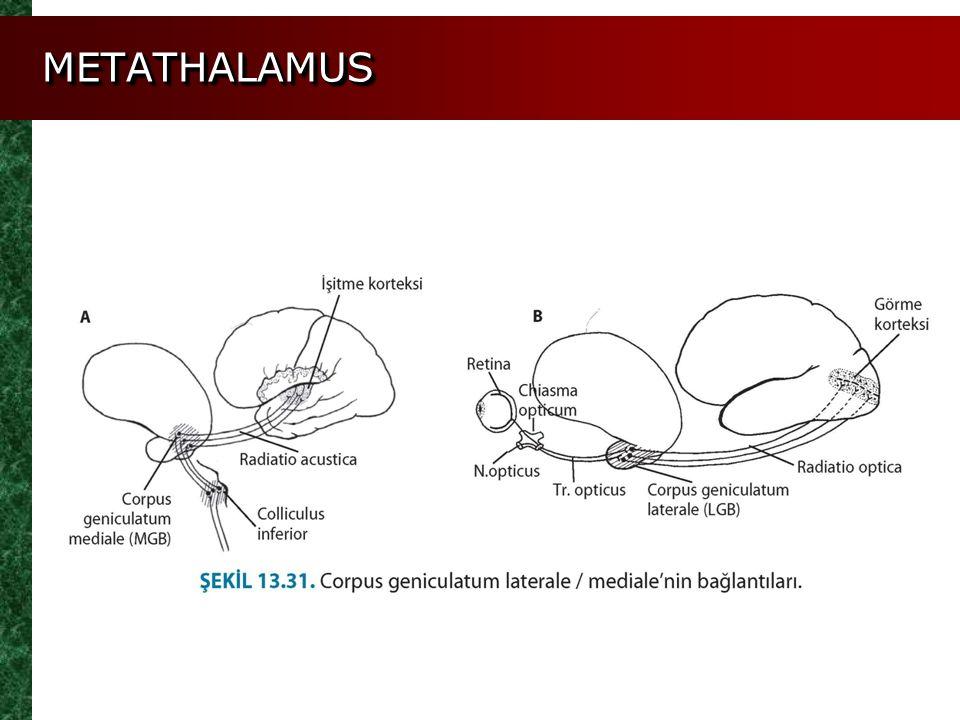 METATHALAMUS