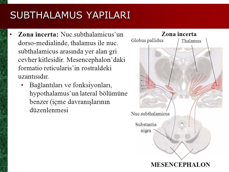 SUBTHALAMUS YAPILARI