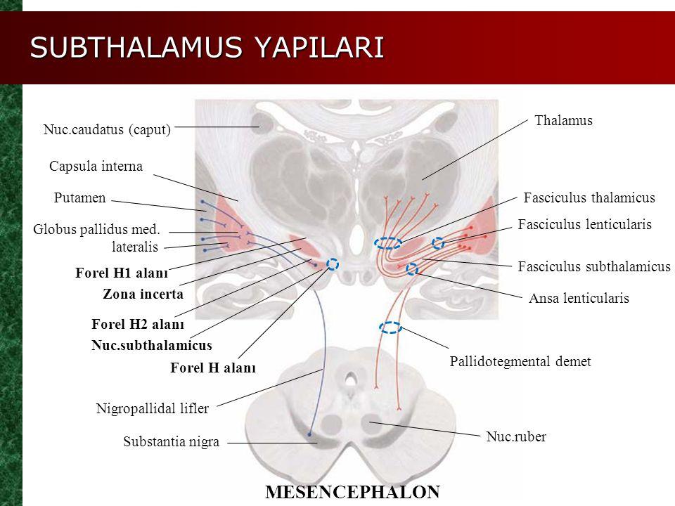 SUBTHALAMUS YAPILARI MESENCEPHALON Thalamus Nuc.caudatus (caput)