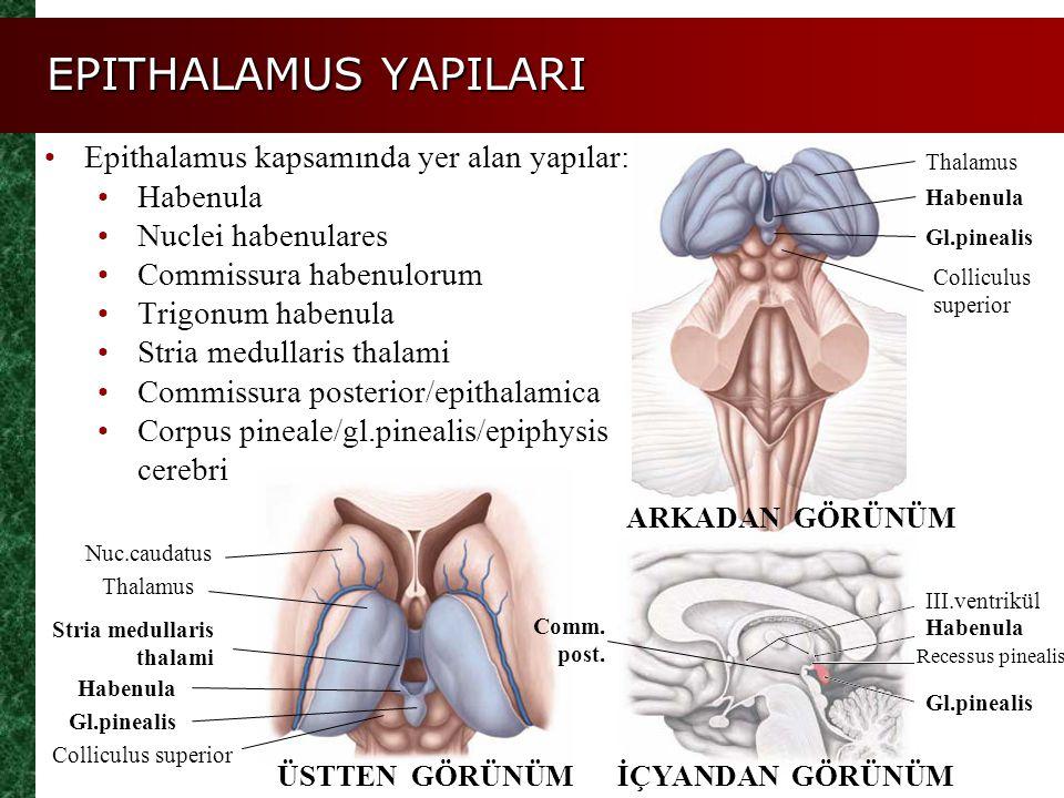EPITHALAMUS YAPILARI Epithalamus kapsamında yer alan yapılar: Habenula