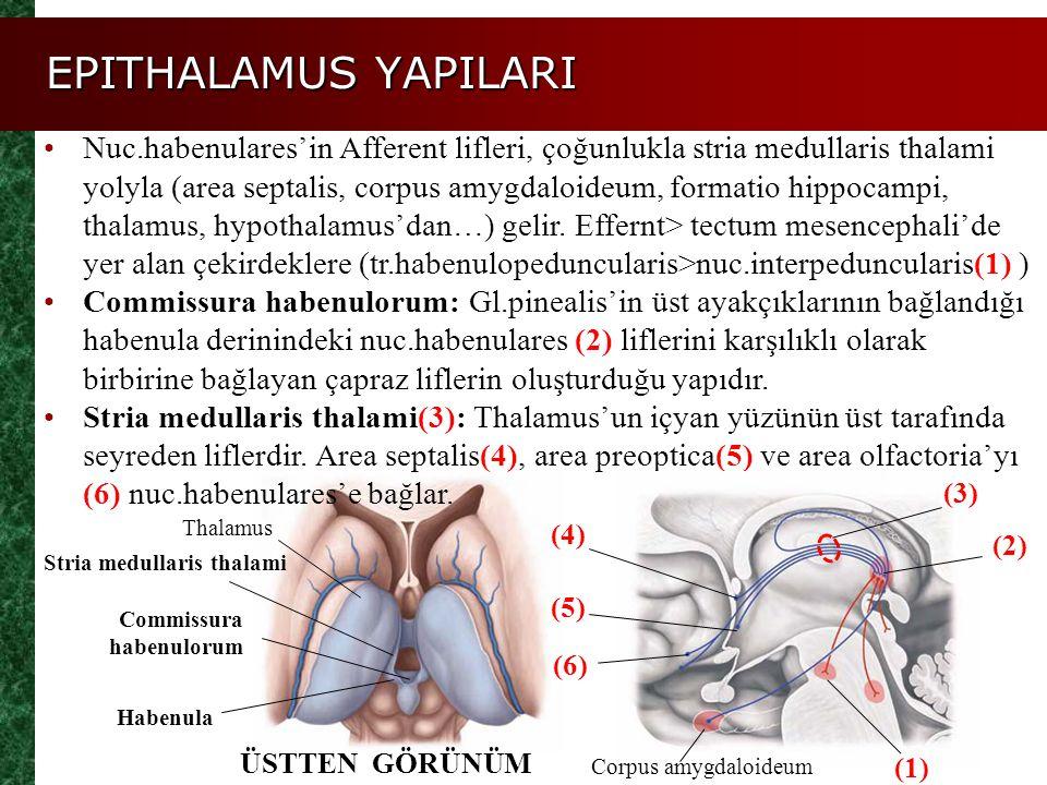 EPITHALAMUS YAPILARI