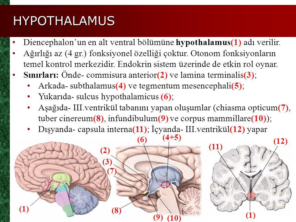 HYPOTHALAMUS Diencephalon'un en alt ventral bölümüne hypothalamus(1) adı verilir.