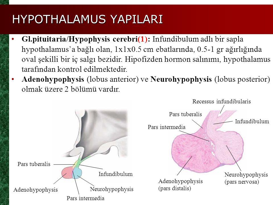 HYPOTHALAMUS YAPILARI