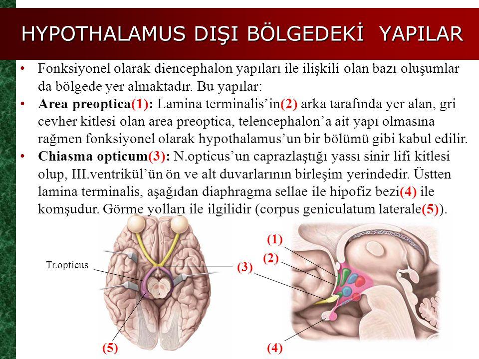 HYPOTHALAMUS DIŞI BÖLGEDEKİ YAPILAR
