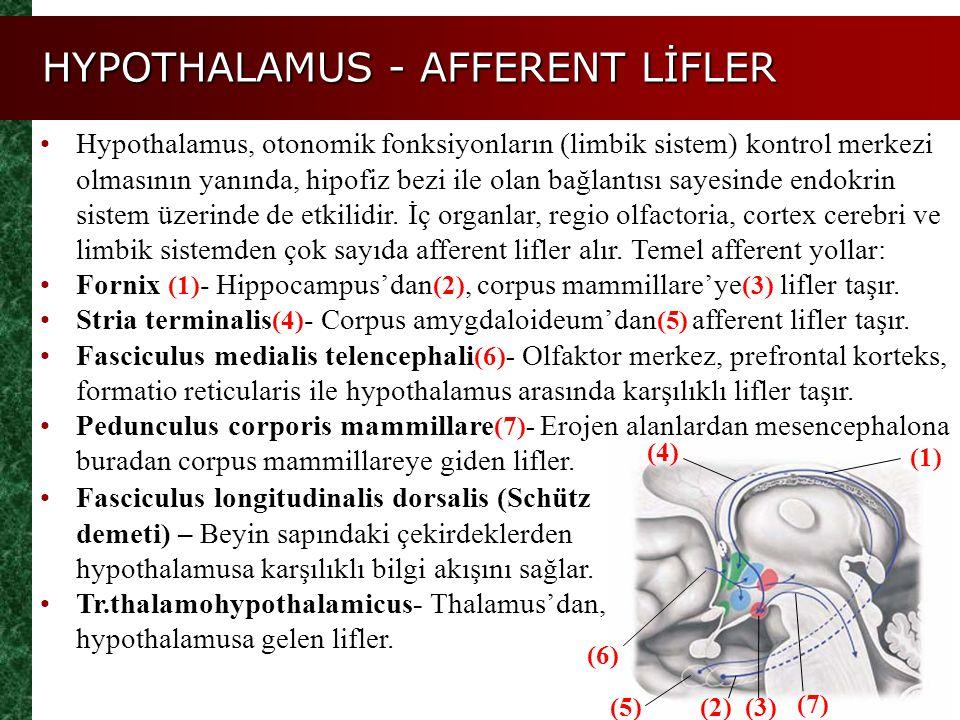HYPOTHALAMUS - AFFERENT LİFLER