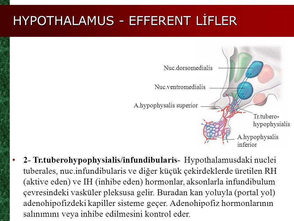 HYPOTHALAMUS - EFFERENT LİFLER