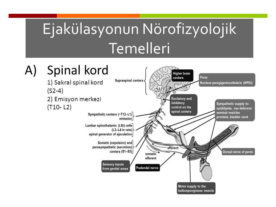Ejakülasyonun Nörofizyolojik Temelleri