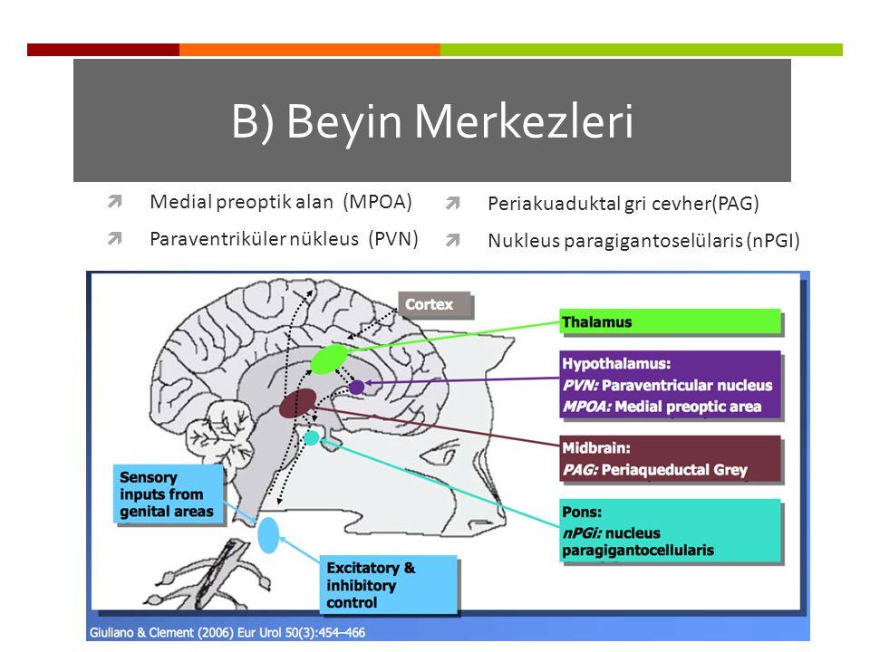 B) Beyin Merkezleri Periakuaduktal gri cevher(PAG)