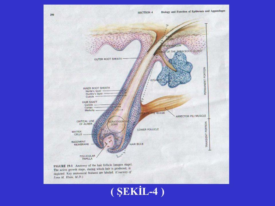 ( ŞEKİL-4 )