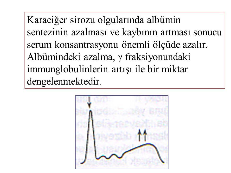 Karaciğer sirozu olgularında albümin sentezinin azalması ve kaybının artması sonucu serum konsantrasyonu önemli ölçüde azalır.
