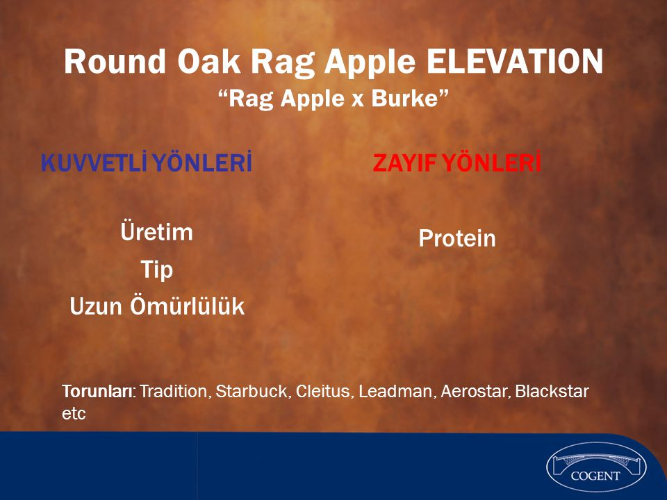 Round Oak Rag Apple ELEVATION Rag Apple x Burke