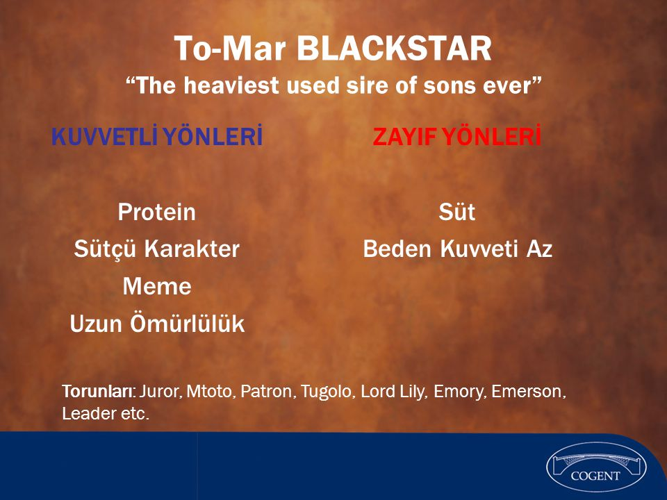 To-Mar BLACKSTAR The heaviest used sire of sons ever