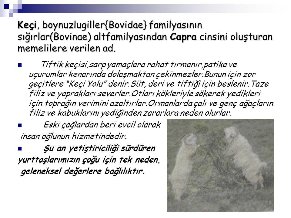 Keçi, boynuzlugiller{Bovidae} familyasının sığırlar(Bovinae) altfamilyasından Capra cinsini oluşturan memelilere verilen ad.