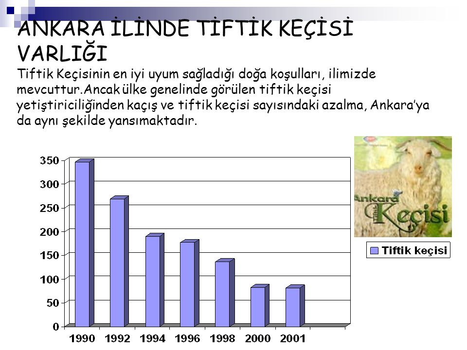 ANKARA İLİNDE TİFTİK KEÇİSİ VARLIĞI Tiftik Keçisinin en iyi uyum sağladığı doğa koşulları, ilimizde mevcuttur.Ancak ülke genelinde görülen tiftik keçisi yetiştiriciliğinden kaçış ve tiftik keçisi sayısındaki azalma, Ankara'ya da aynı şekilde yansımaktadır.