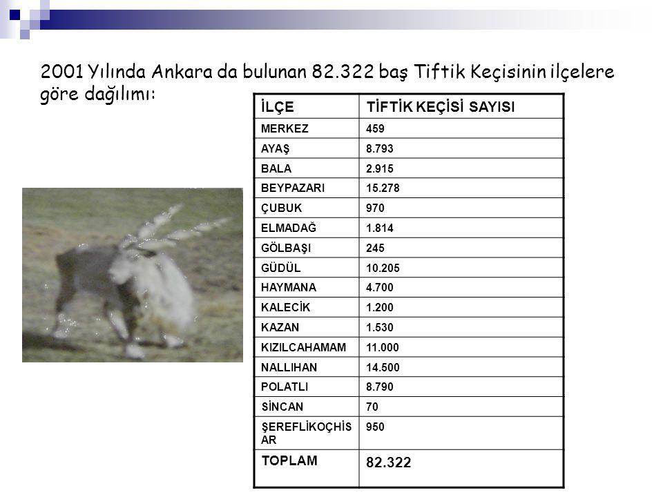 2001 Yılında Ankara da bulunan 82